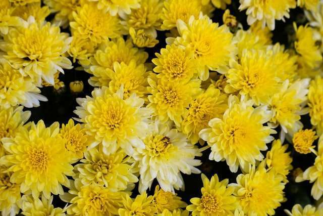 10 plants with yellow flowers 609bb46d49b05 10 Plants with Yellow Flowers