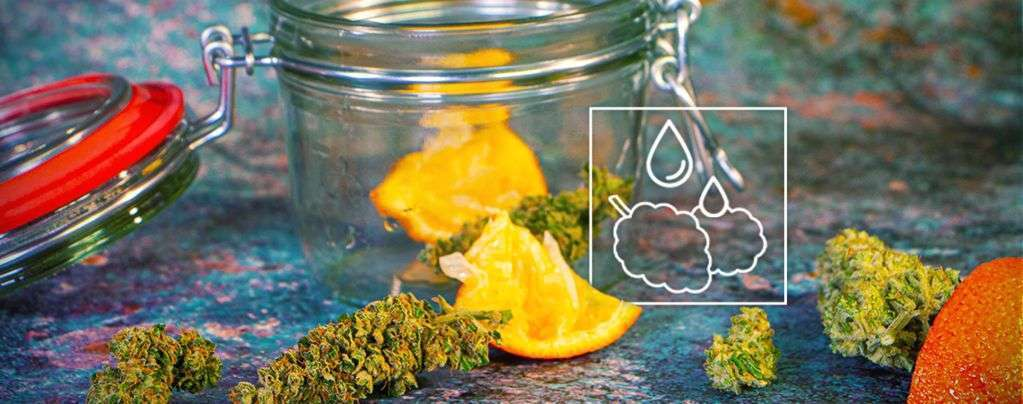 how to rehydrate your dried out marijuana buds 6091c6e4835da How To Rehydrate Your Dried-Out Marijuana Buds